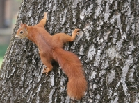 Climb Animals Cute Nature Squirrel Tree